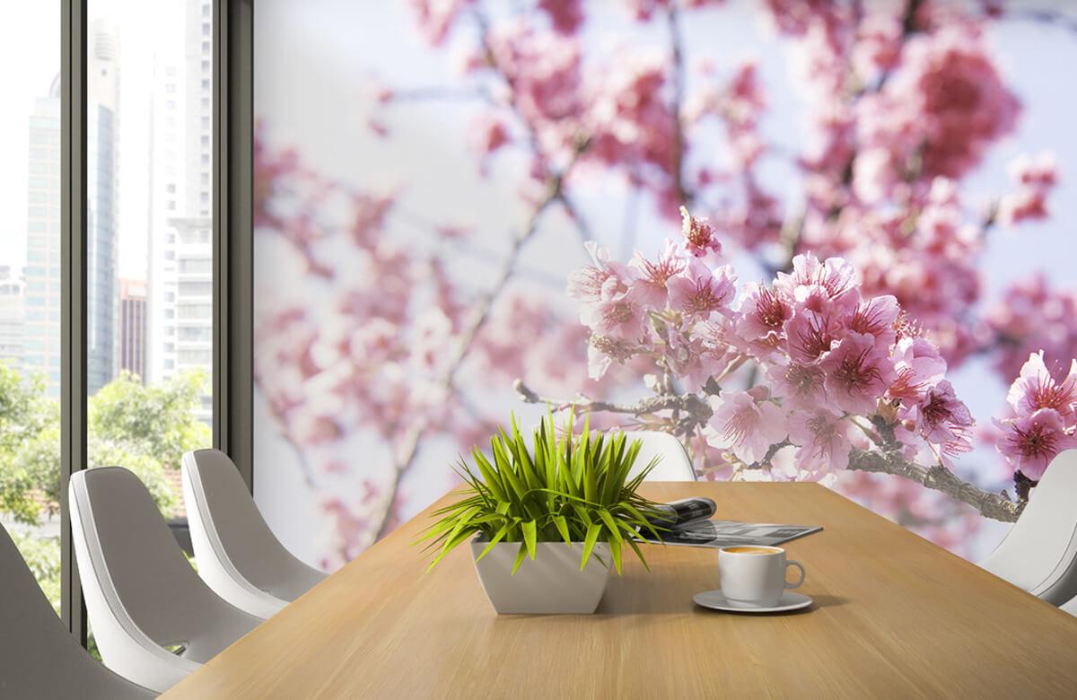 Bloemen, planten en bomen Close-up roze bloesem 3
