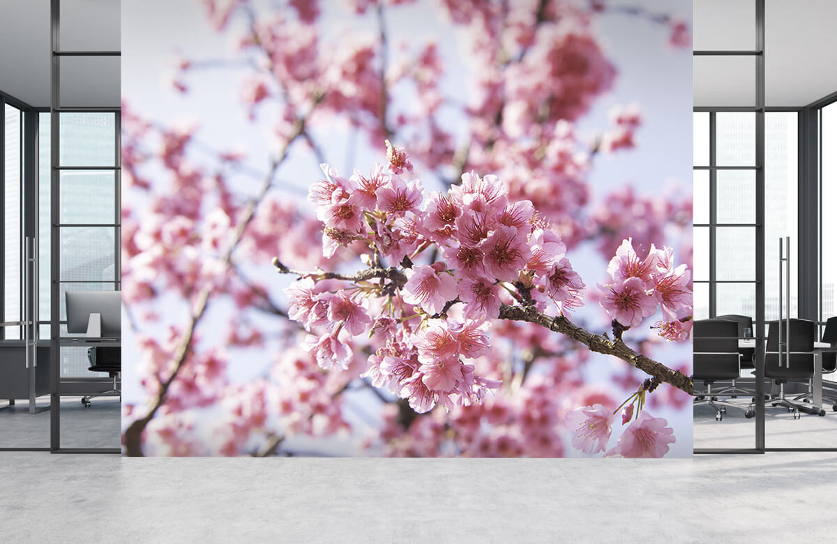 Bloemen, planten en bomen Close-up roze bloesem 4