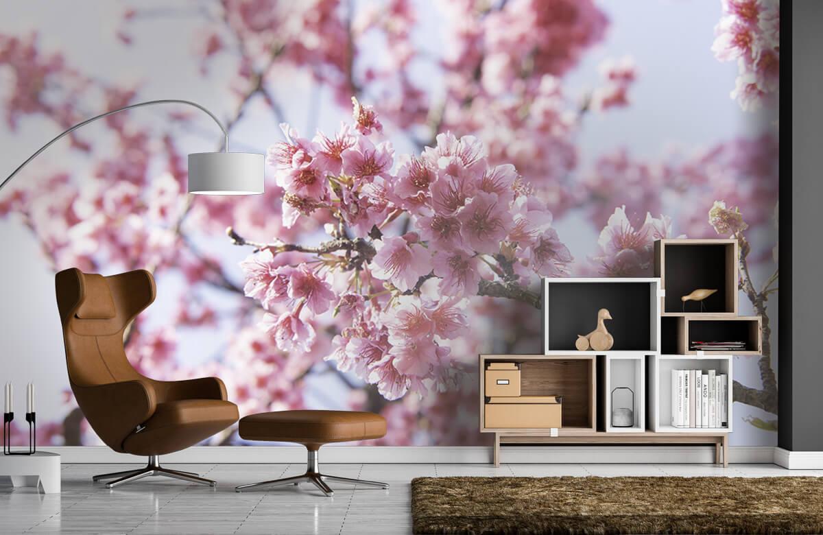 Bloemen, planten en bomen Close-up roze bloesem 5