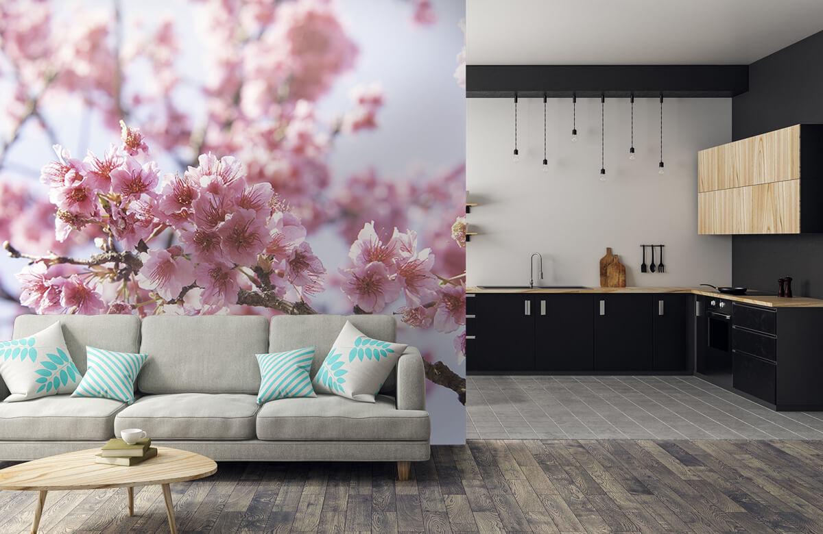 Bloemen, planten en bomen Close-up roze bloesem 6