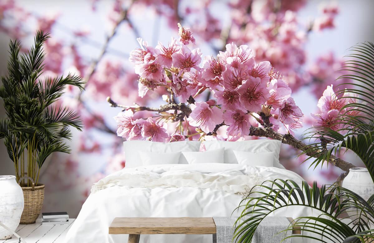 Bloemen, planten en bomen Close-up roze bloesem 7