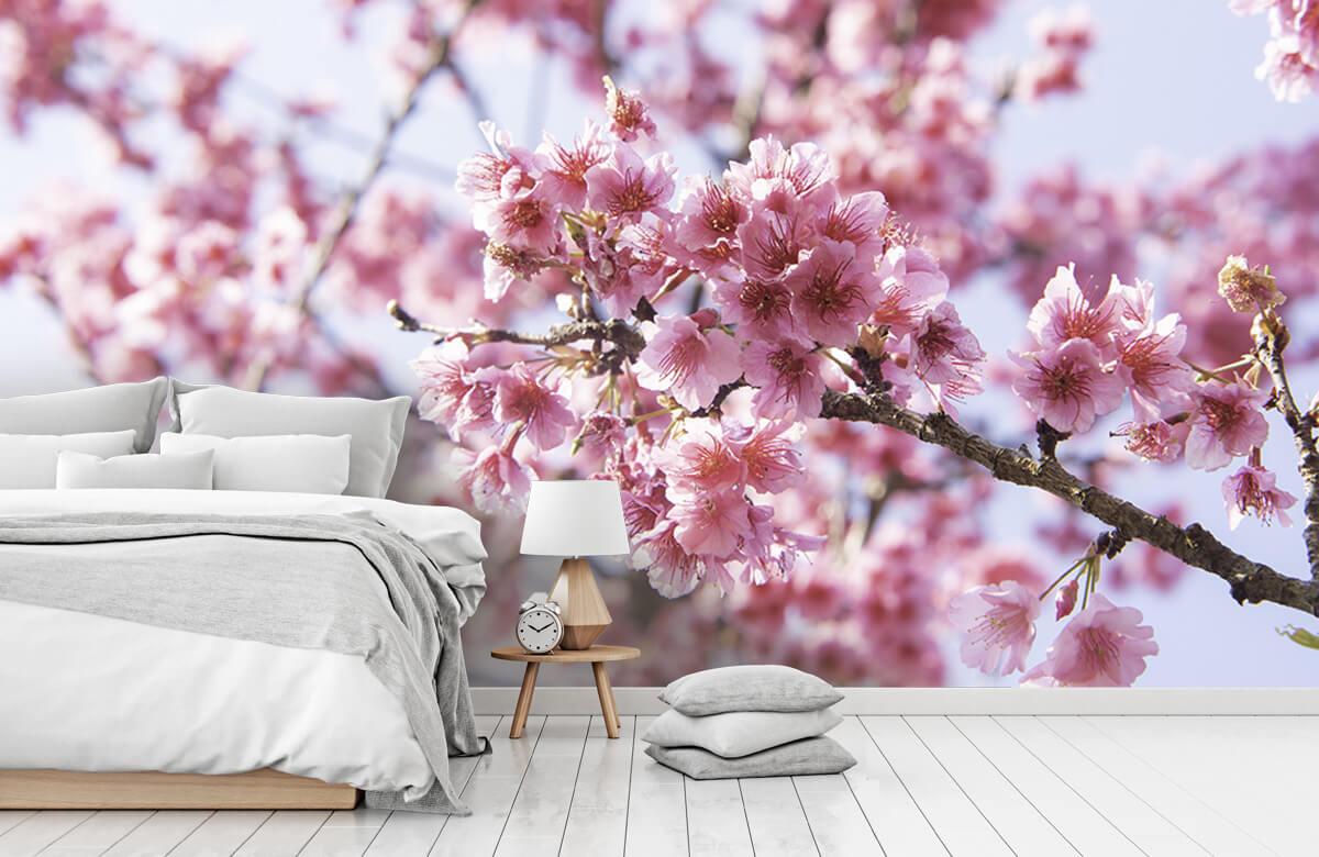 Bloemen, planten en bomen Close-up roze bloesem 8