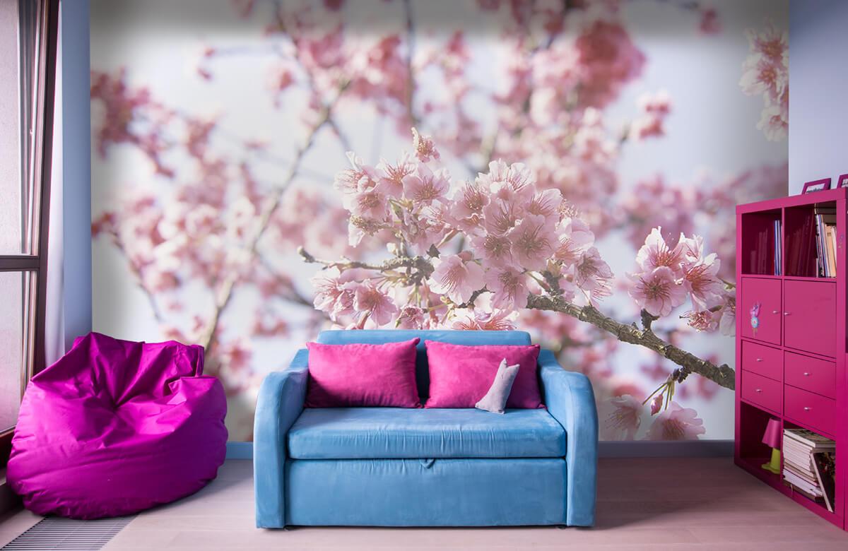 Bloemen, planten en bomen Close-up roze bloesem 1
