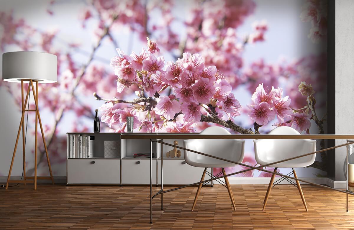 Bloemen, planten en bomen Close-up roze bloesem 11