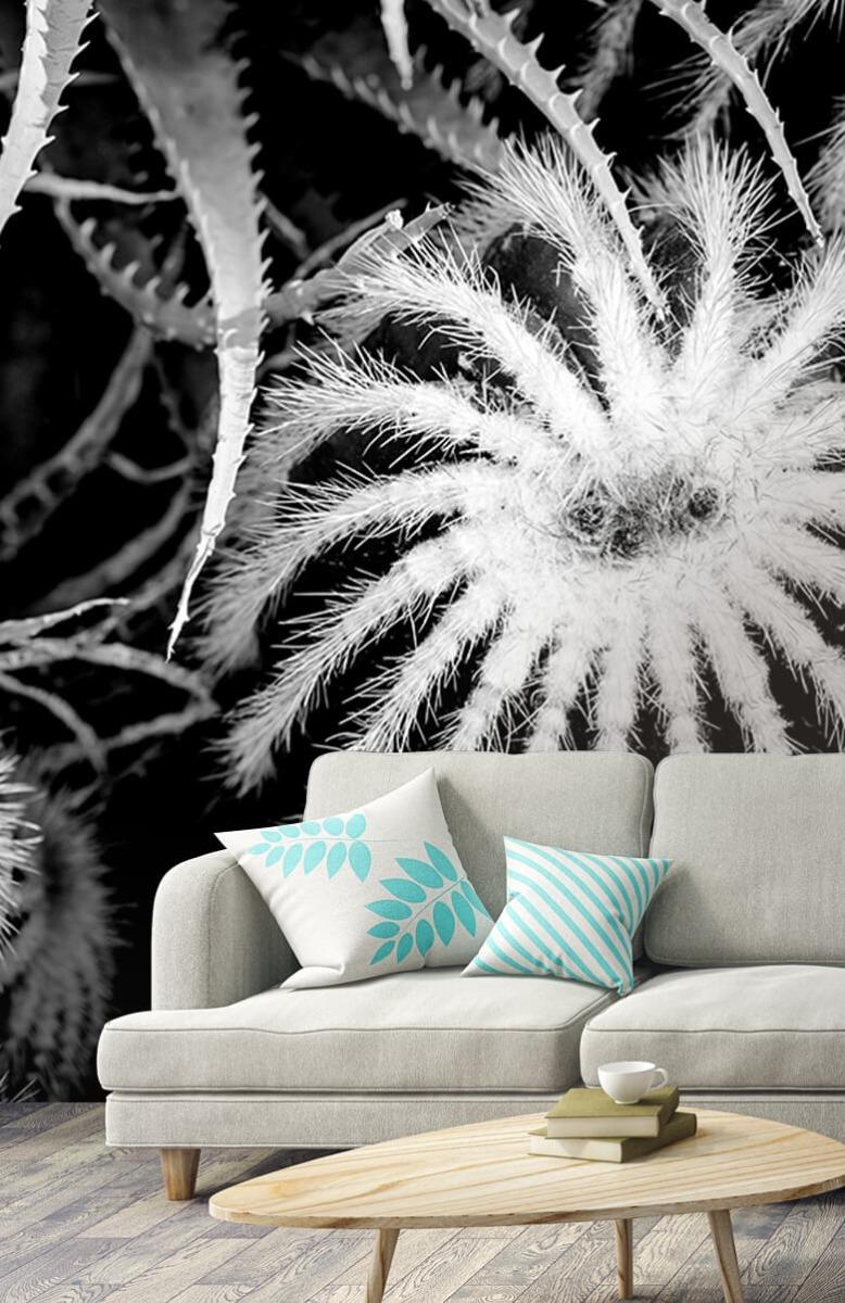 Bloemen, planten en bomen Zwart-wit cactussen 3