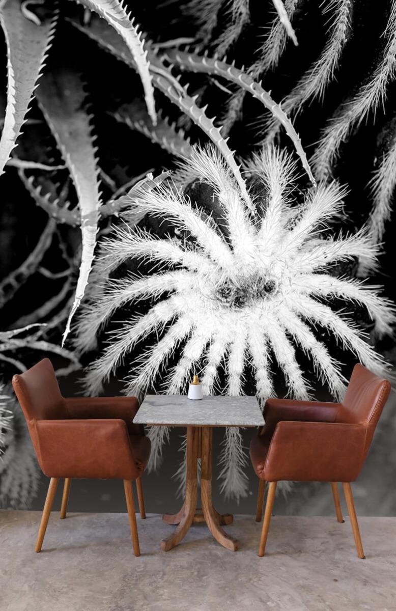Bloemen, planten en bomen Zwart-wit cactussen 4