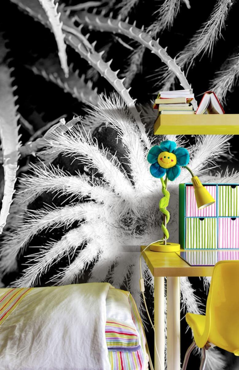 Bloemen, planten en bomen Zwart-wit cactussen 7