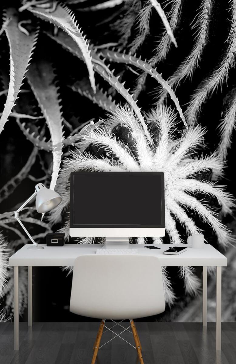 Bloemen, planten en bomen Zwart-wit cactussen 10