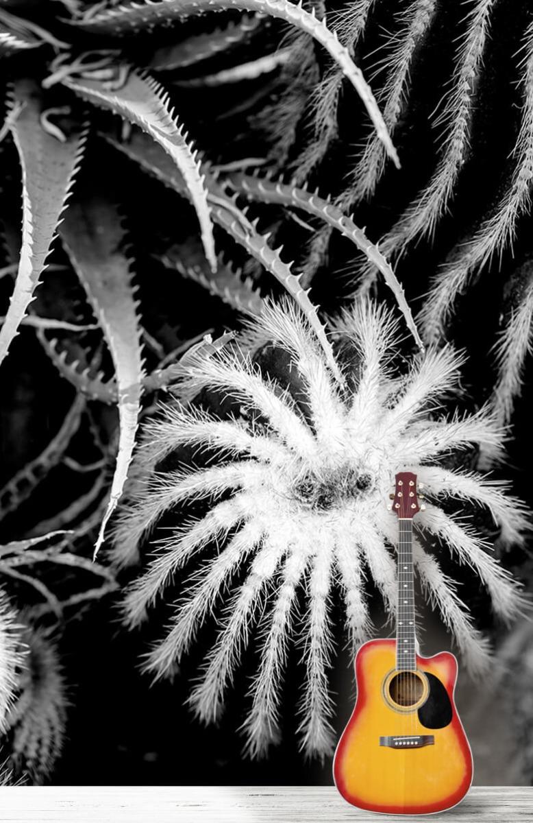 Bloemen, planten en bomen Zwart-wit cactussen 11