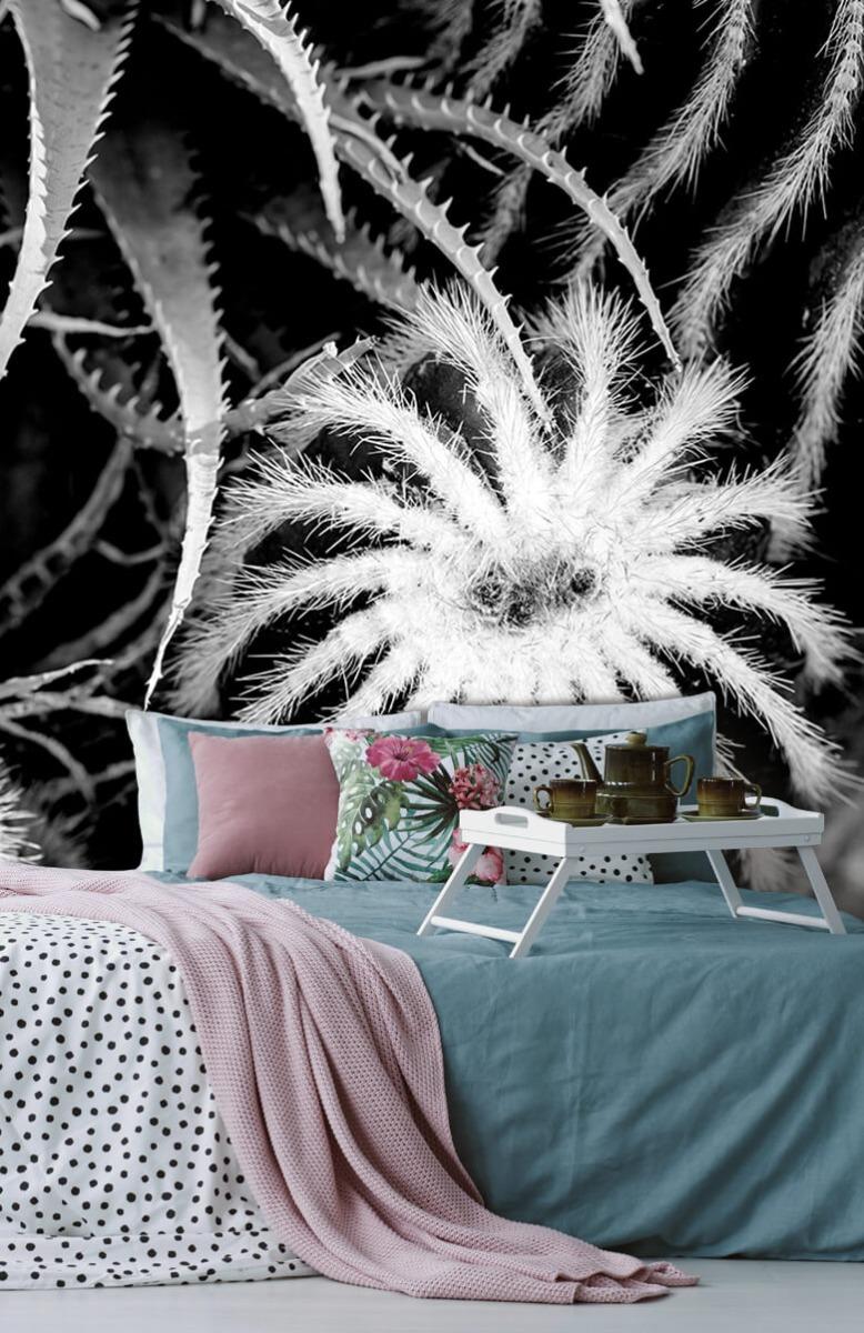 Bloemen, planten en bomen Zwart-wit cactussen 12