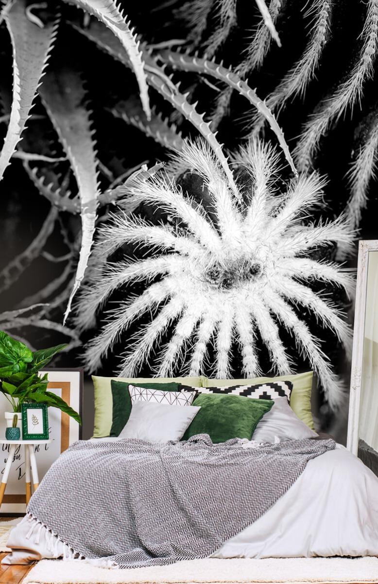 Bloemen, planten en bomen Zwart-wit cactussen 13