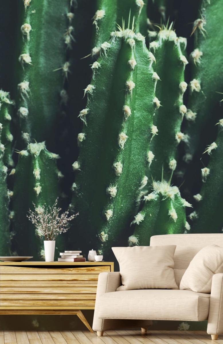 Bloemen, planten en bomen Close-up groene cactus 2
