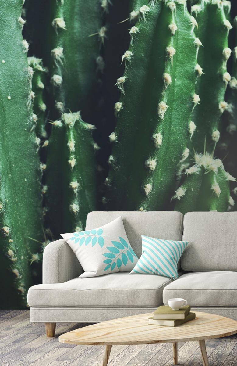 Bloemen, planten en bomen Close-up groene cactus 4