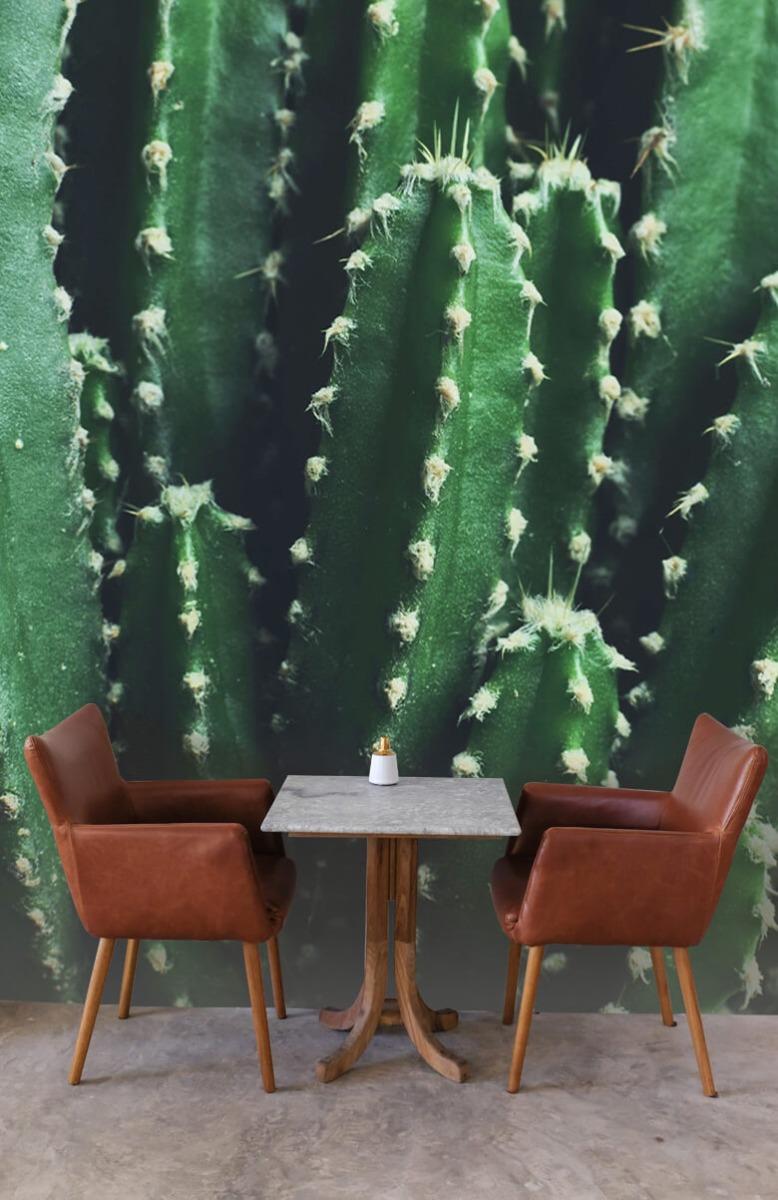 Bloemen, planten en bomen Close-up groene cactus 3