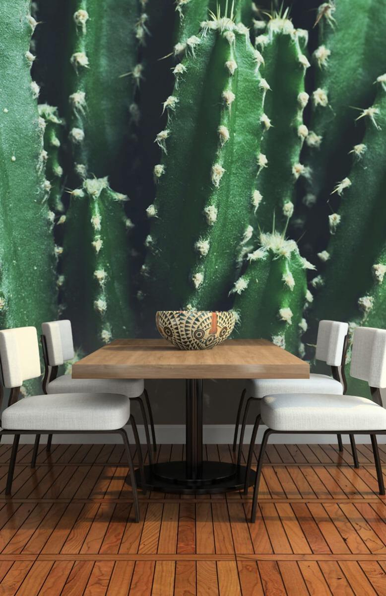 Bloemen, planten en bomen Close-up groene cactus 5