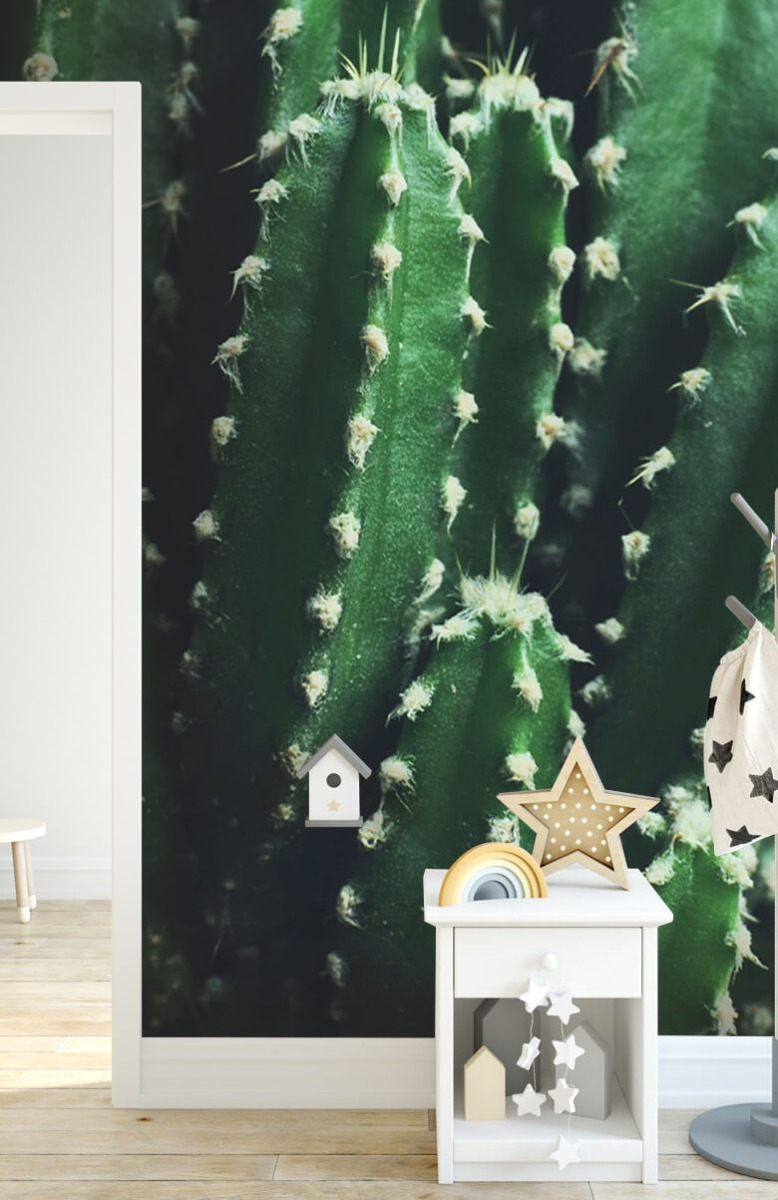 Bloemen, planten en bomen Close-up groene cactus 6