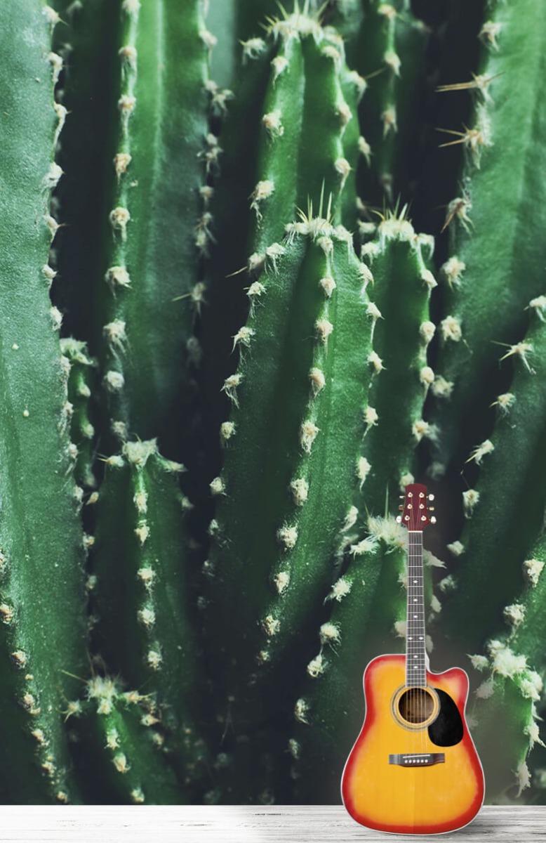 Bloemen, planten en bomen Close-up groene cactus 11