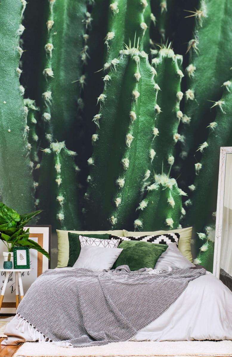 Bloemen, planten en bomen Close-up groene cactus 13