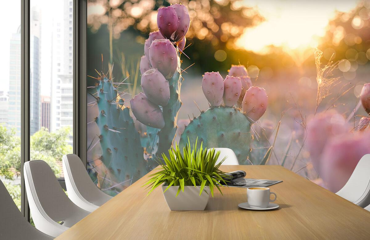 Bloemen, planten en bomen Cactus met bloemen 1