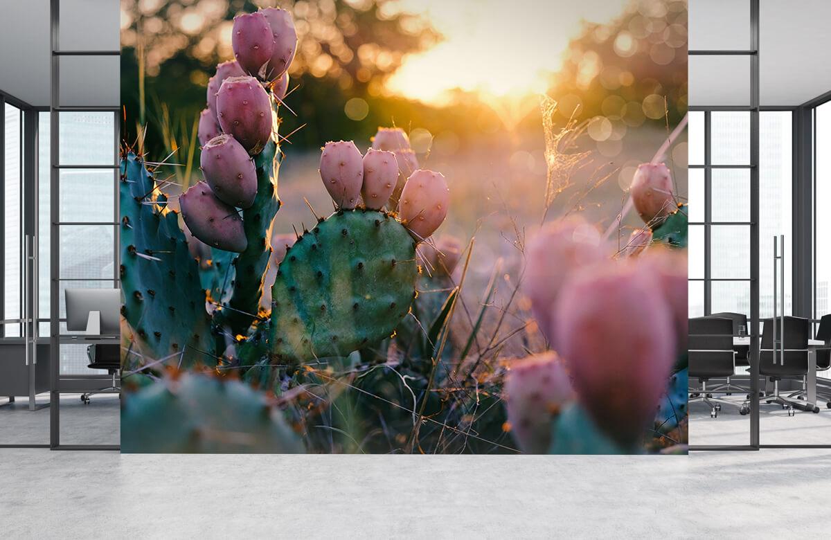 Bloemen, planten en bomen Cactus met bloemen 2