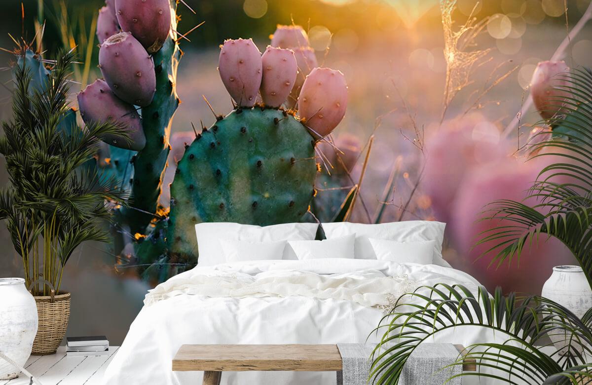 Bloemen, planten en bomen Cactus met bloemen 6