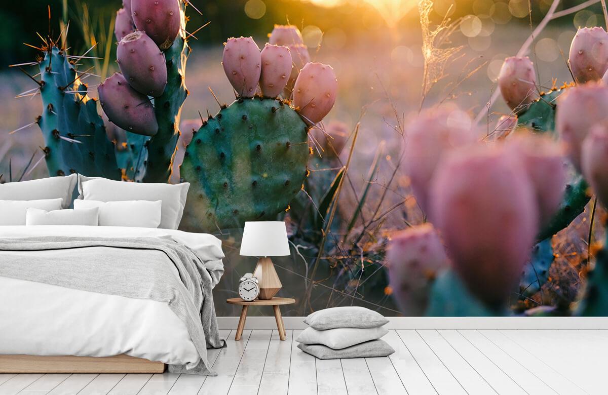 Bloemen, planten en bomen Cactus met bloemen 7