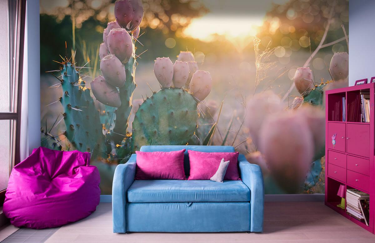 Bloemen, planten en bomen Cactus met bloemen 10