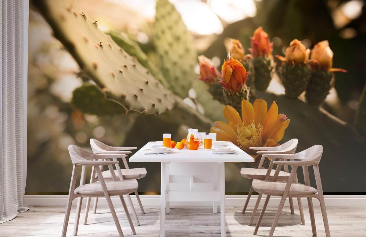 Bloemen, planten en bomen Oranje cactus bloemen 3