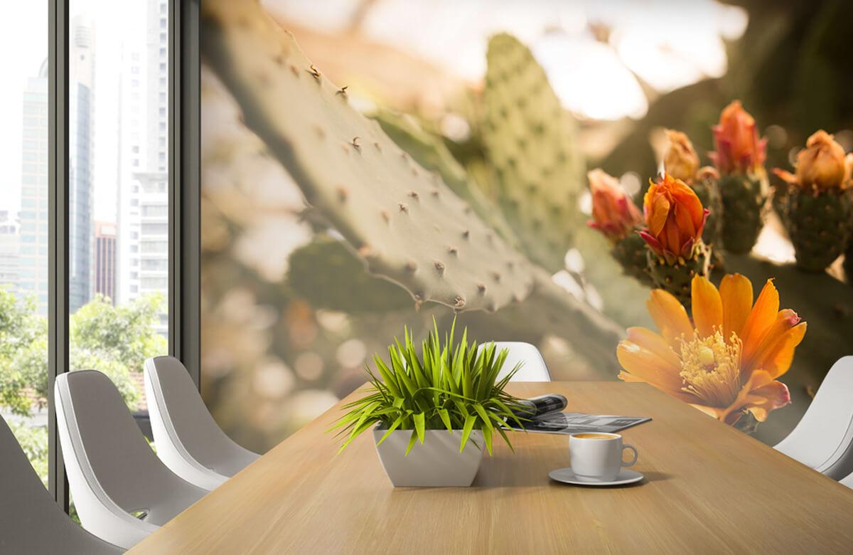 Bloemen, planten en bomen Oranje cactus bloemen 4