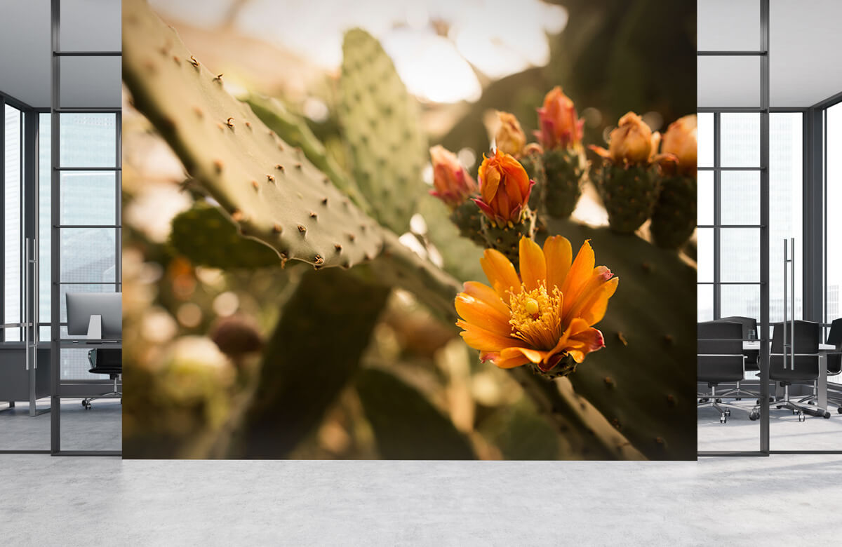 Bloemen, planten en bomen Oranje cactus bloemen 5