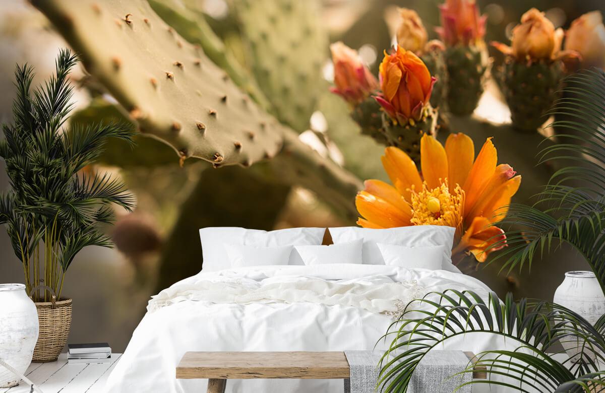 Bloemen, planten en bomen Oranje cactus bloemen 1