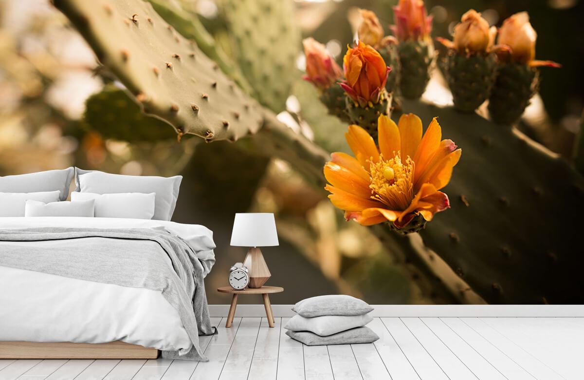 Bloemen, planten en bomen Oranje cactus bloemen 7