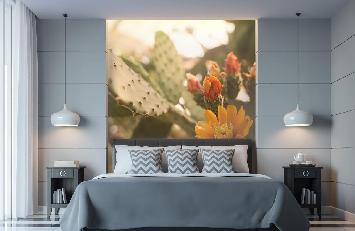 Bloemen, planten en bomen Oranje cactus bloemen 8