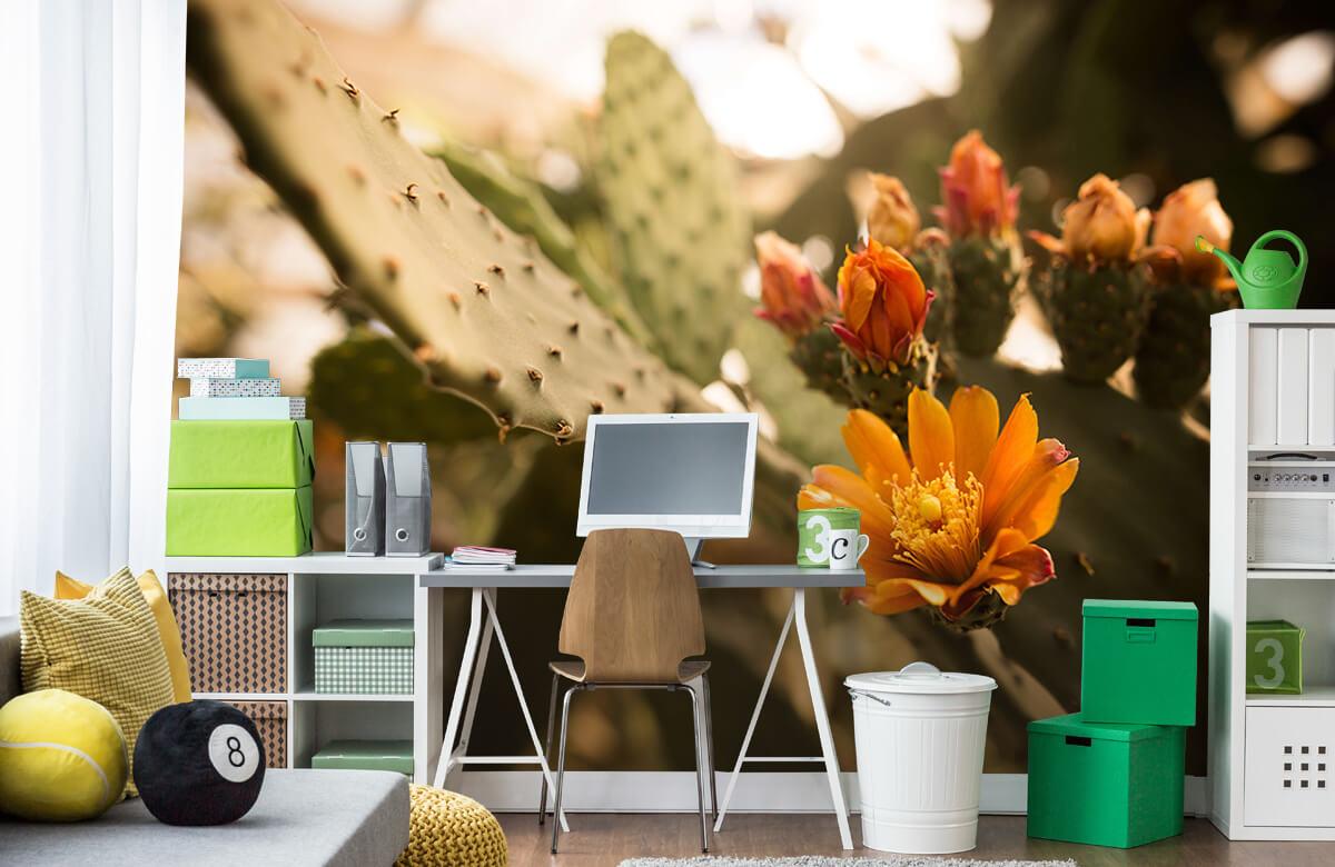 Bloemen, planten en bomen Oranje cactus bloemen 9