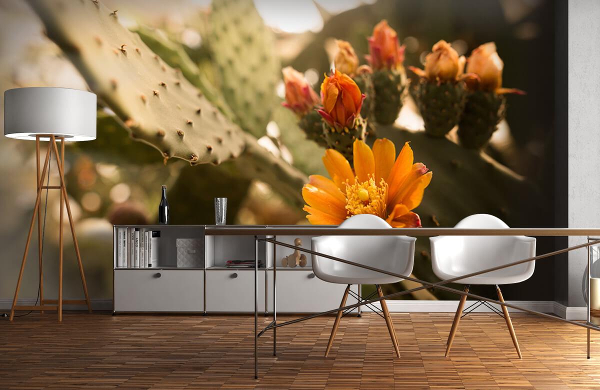 Bloemen, planten en bomen Oranje cactus bloemen 11