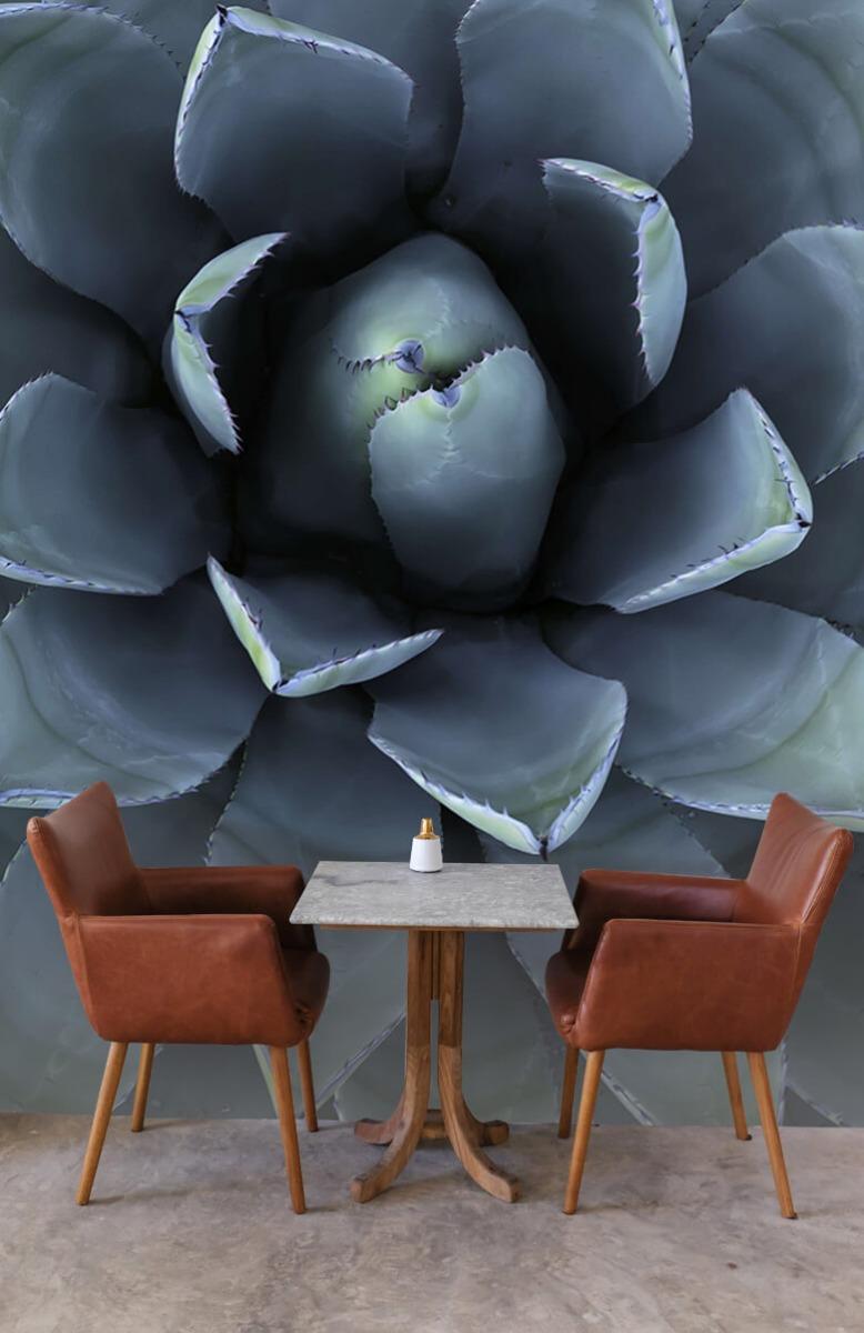 Bloemen, planten en bomen Blauwe vetplant 5