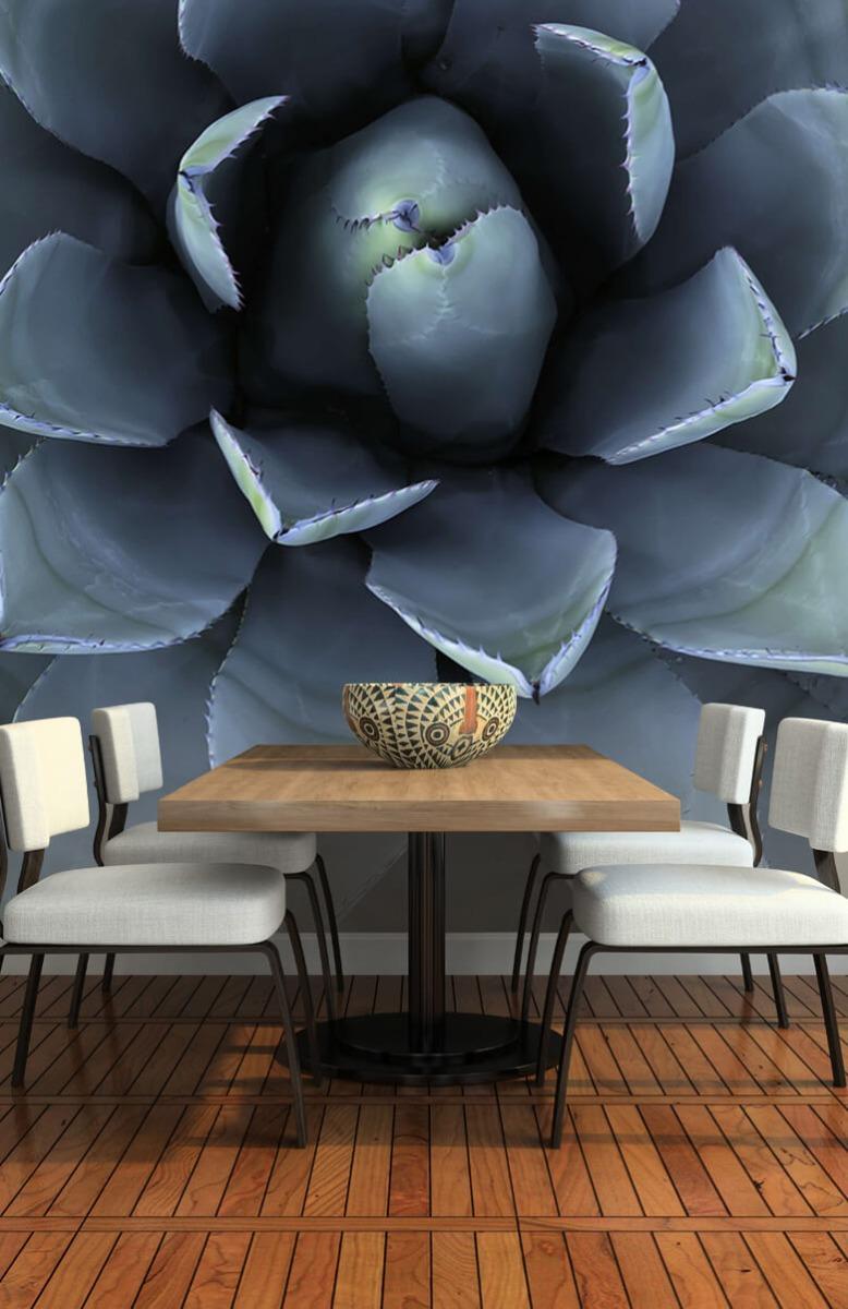 Bloemen, planten en bomen Blauwe vetplant 2