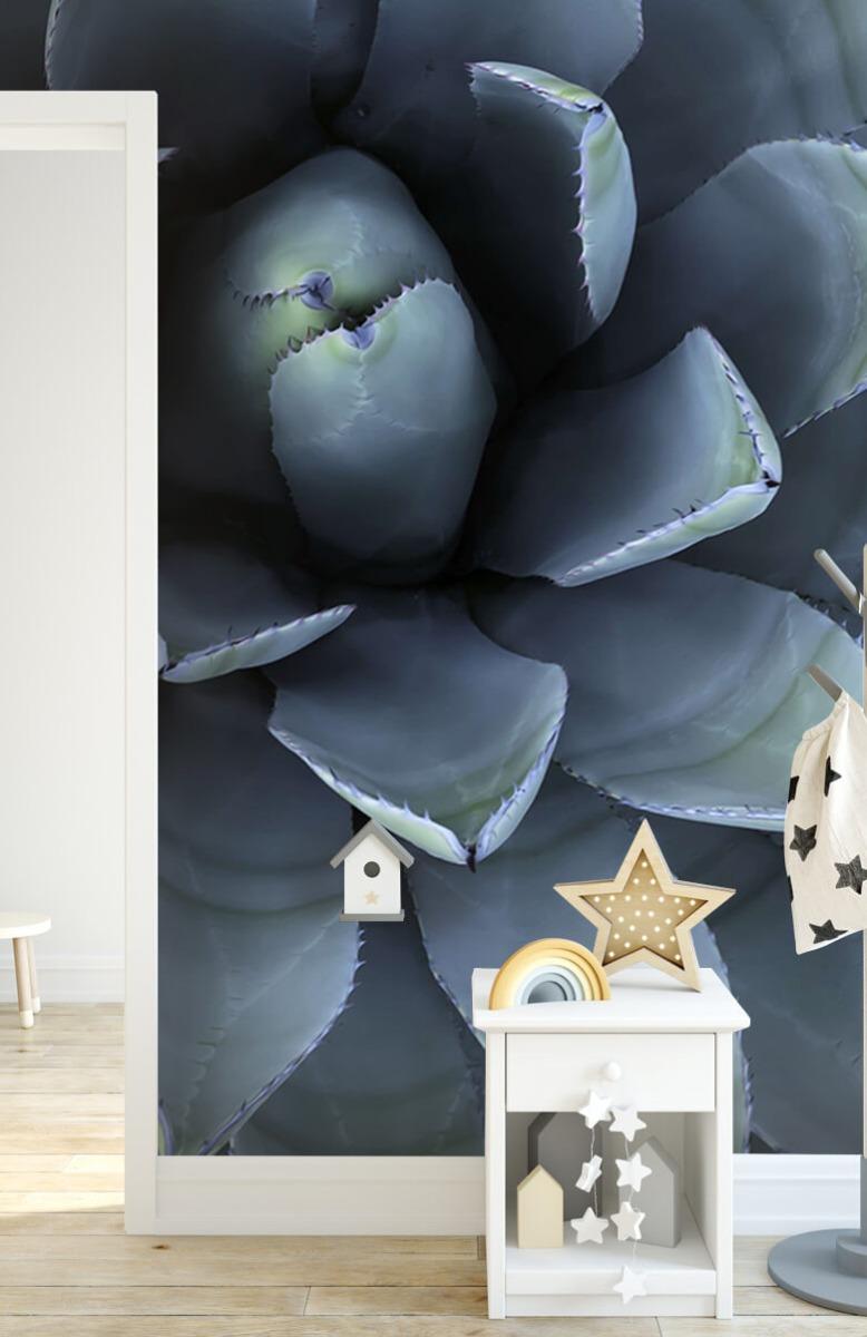 Bloemen, planten en bomen Blauwe vetplant 7