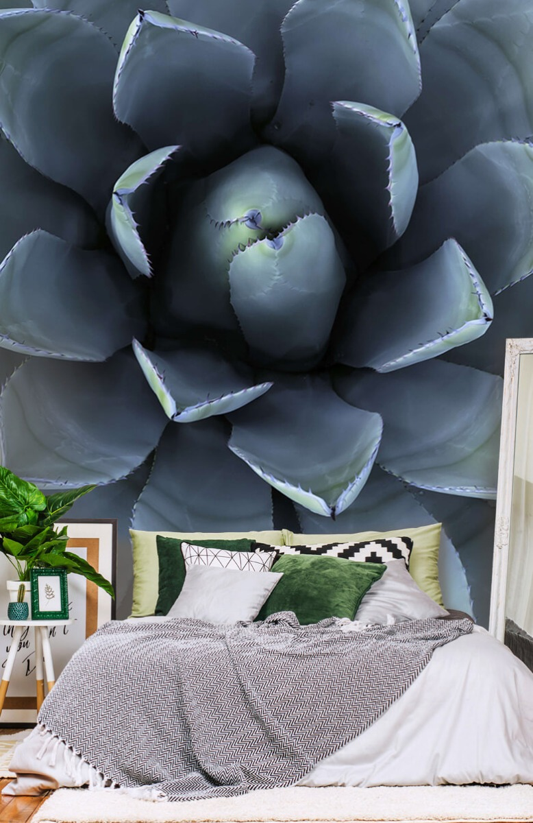 Bloemen, planten en bomen Blauwe vetplant 13