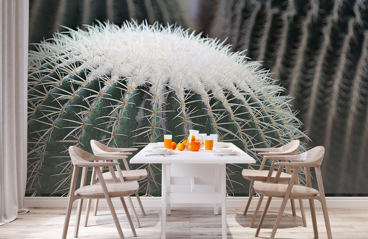 Bloemen, planten en bomen Ronde cactus 2