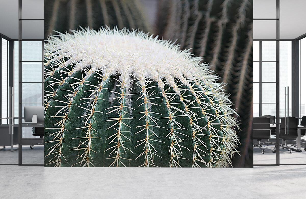 Bloemen, planten en bomen Ronde cactus 4