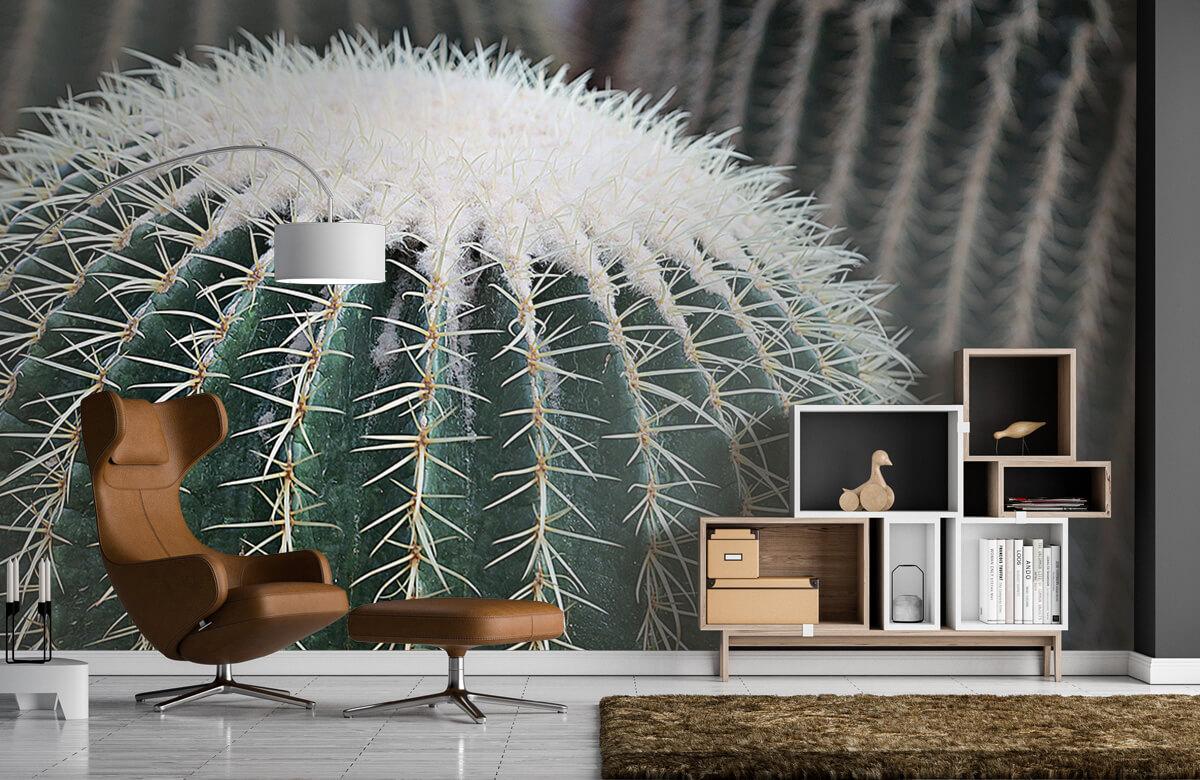 Bloemen, planten en bomen Ronde cactus 1