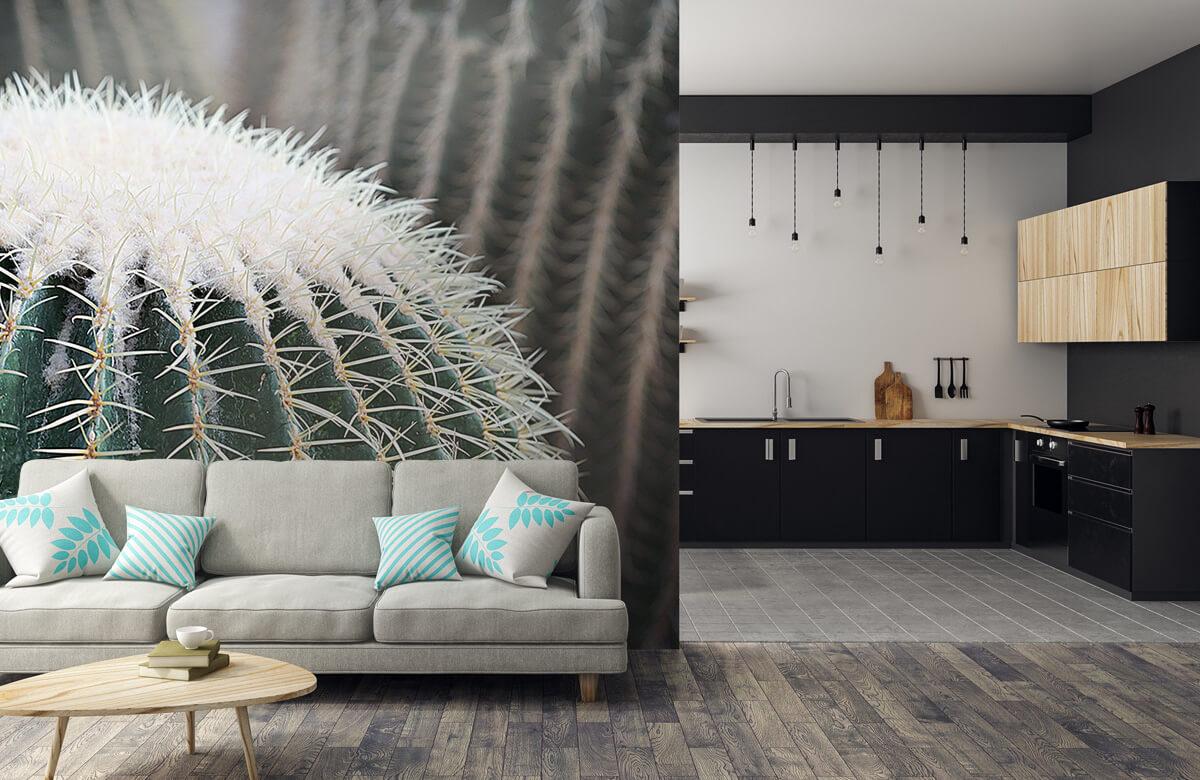 Bloemen, planten en bomen Ronde cactus 5