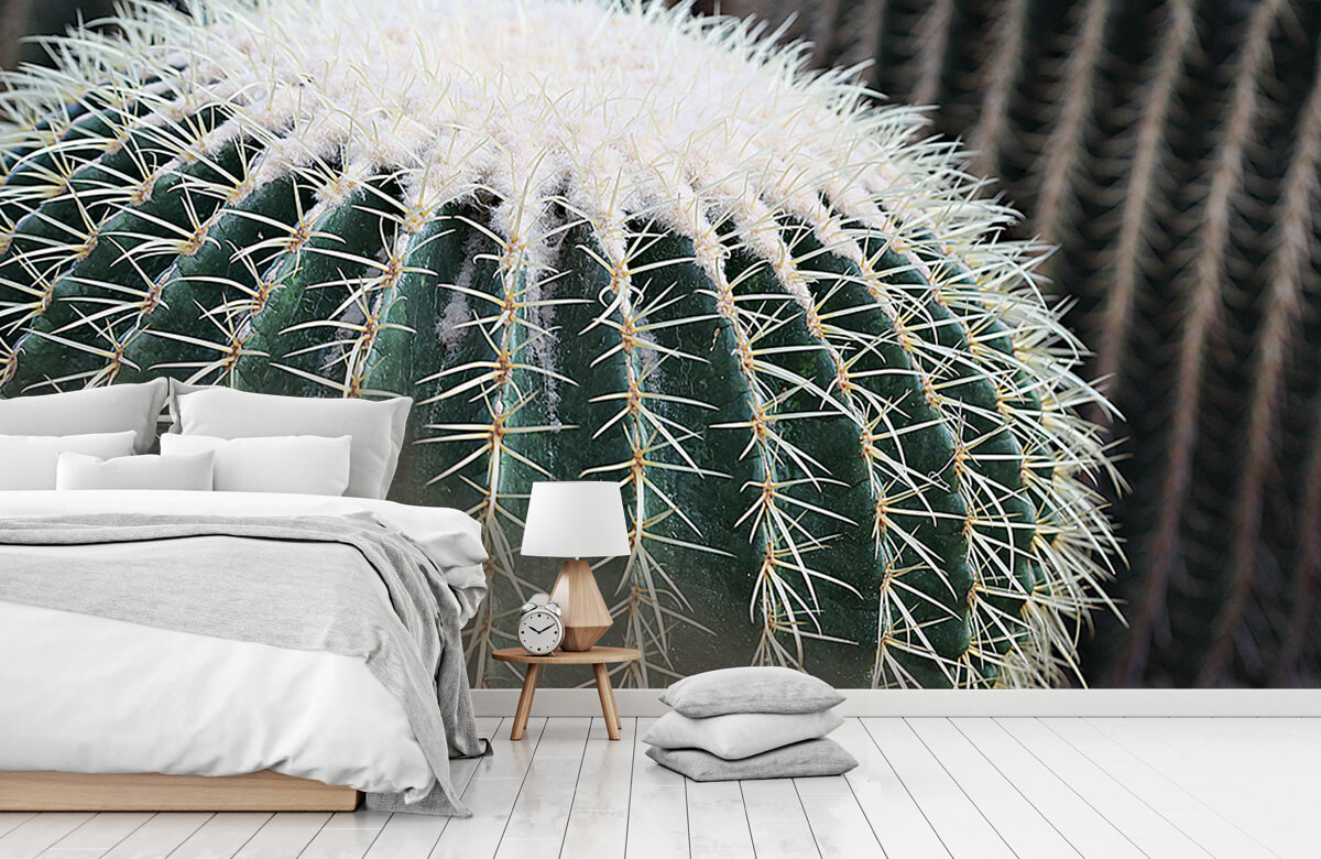 Bloemen, planten en bomen Ronde cactus 7
