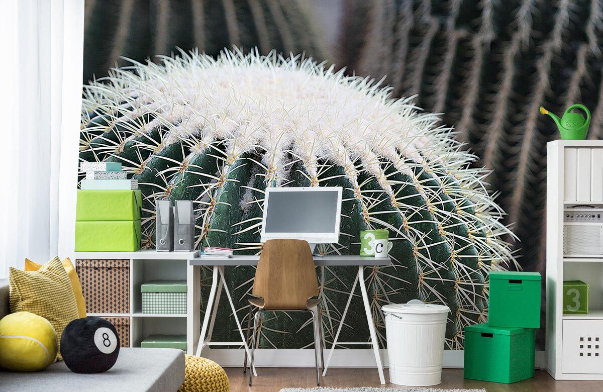 Bloemen, planten en bomen Ronde cactus 9