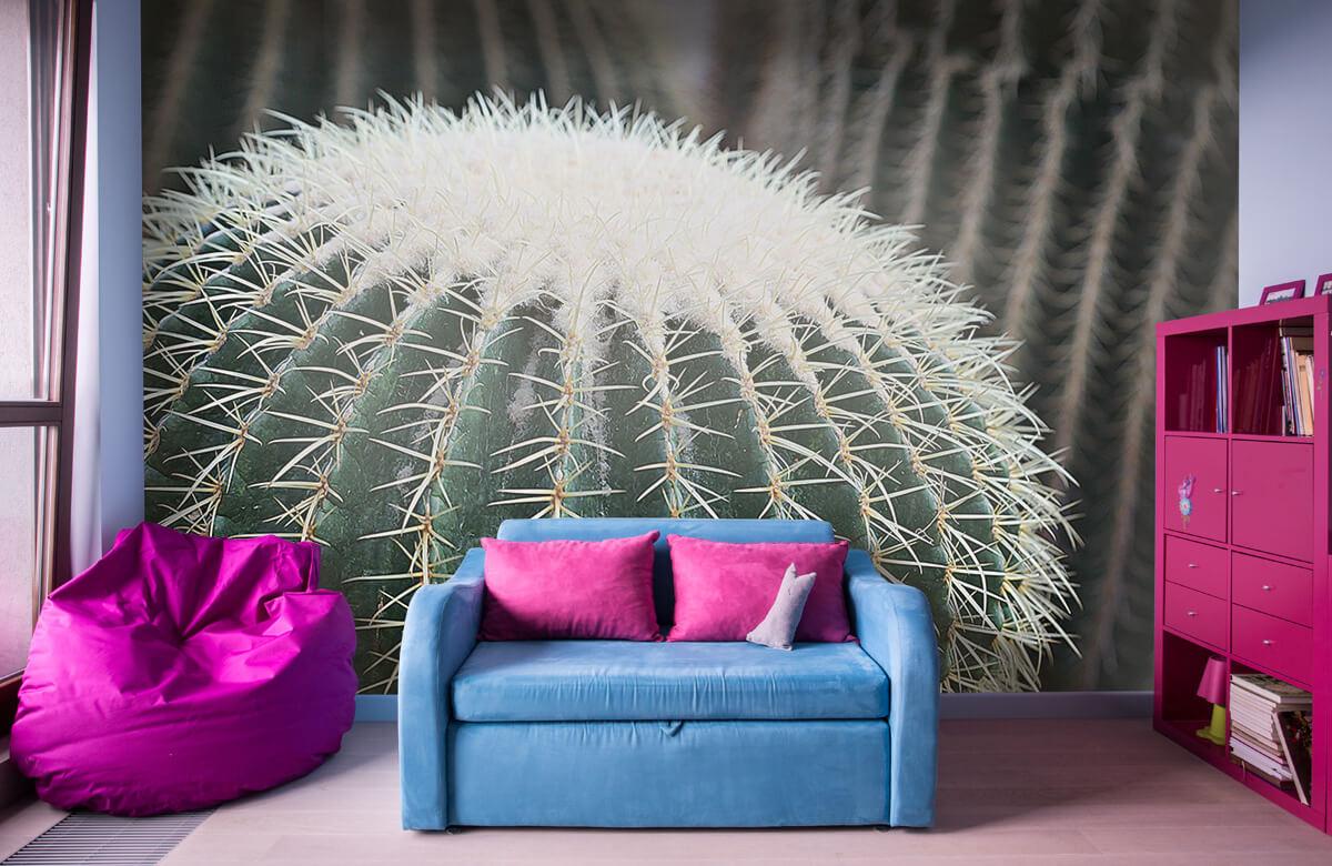 Bloemen, planten en bomen Ronde cactus 10