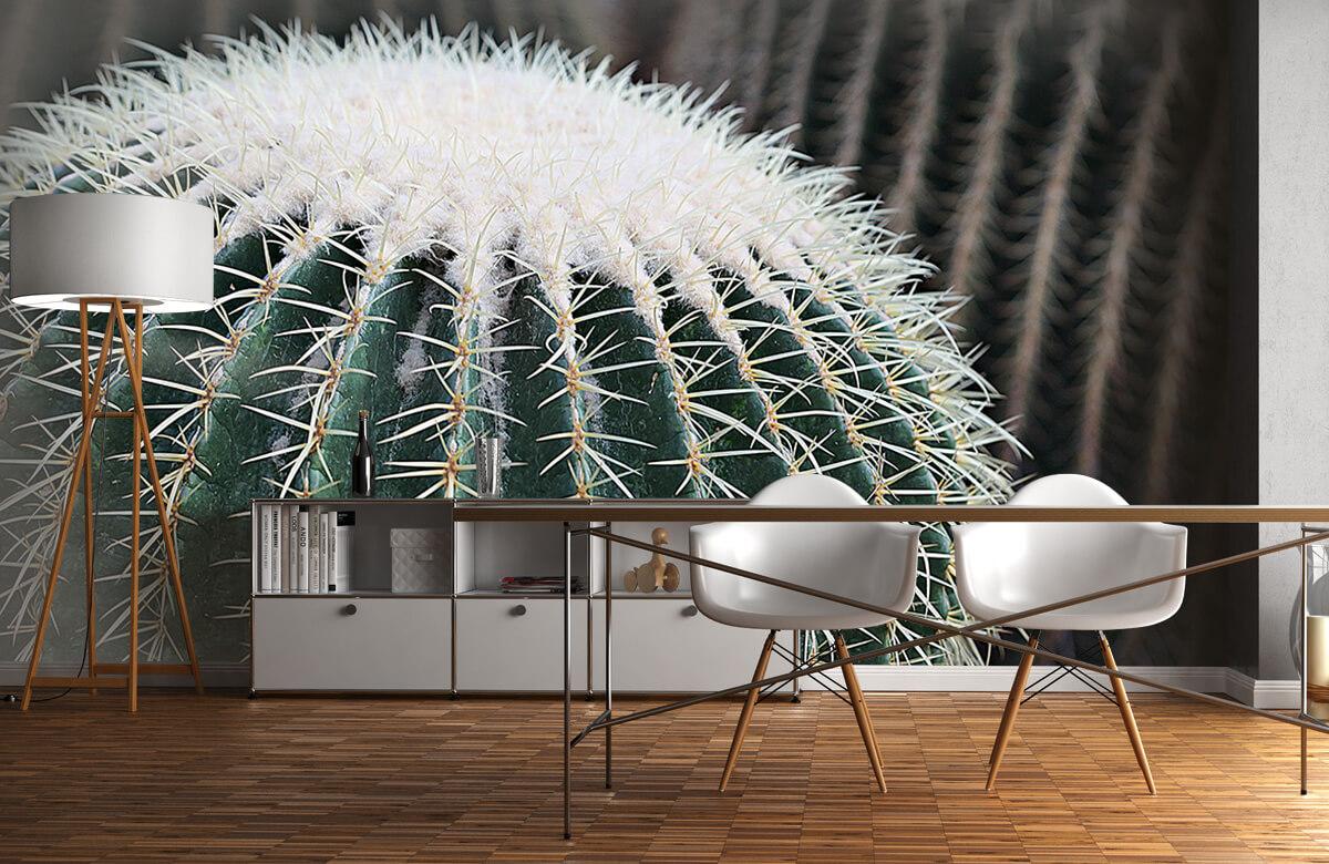 Bloemen, planten en bomen Ronde cactus 11