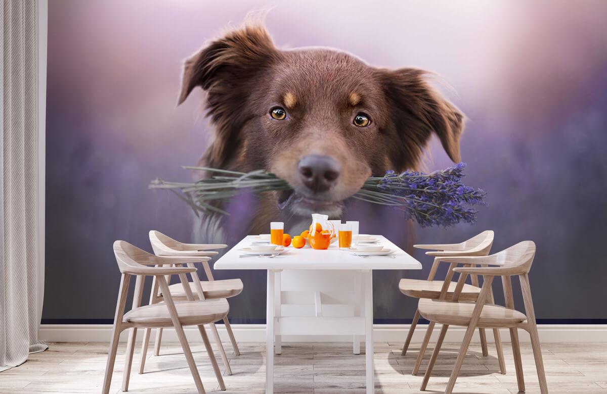 Bloemen, planten en bomen Hond met lavendel 2