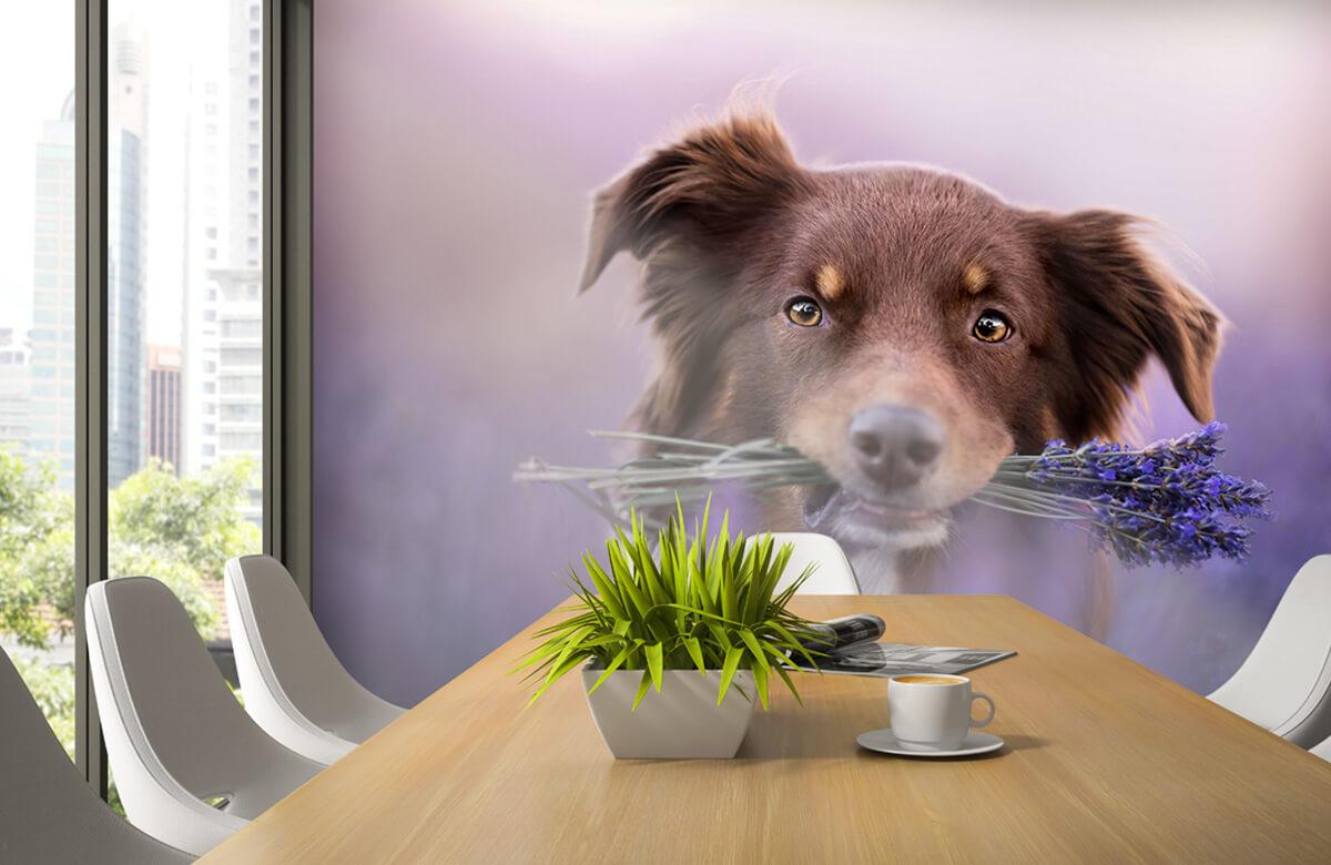 Bloemen, planten en bomen Hond met lavendel 3