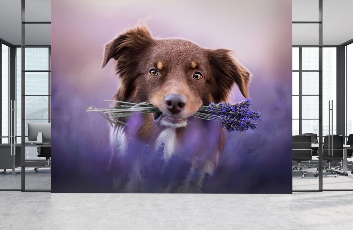 Bloemen, planten en bomen Hond met lavendel 4